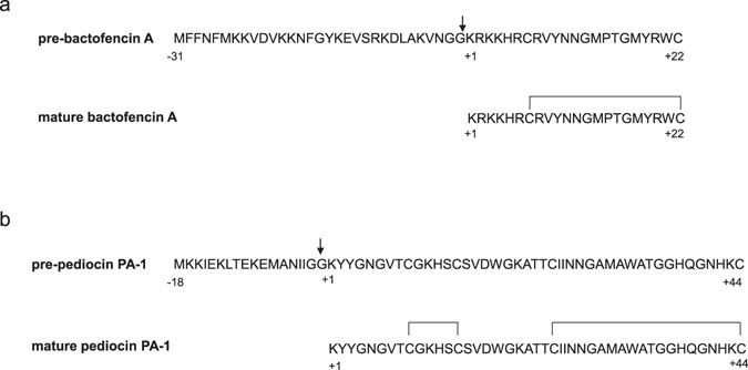 Controlled Functional Expression Of The Bacteriocins Pediocin Pa 1