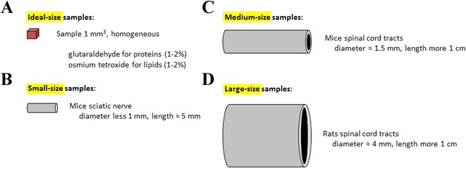 Size and specimen-dependent strategy for x-ray micro-ct and
