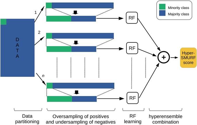 Imbalance-Aware Machine Learning for Predicting Rare and
