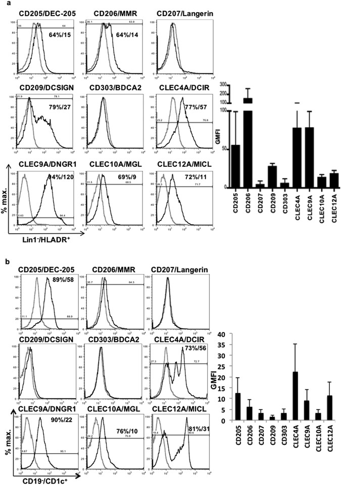 Antibody blockade of CLEC12A delays EAE onset and attenuates disease