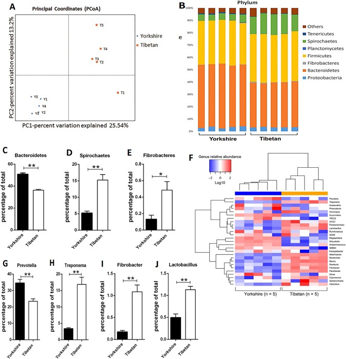 Early Gut Microbiota Intervention Suppresses DSS-Induced