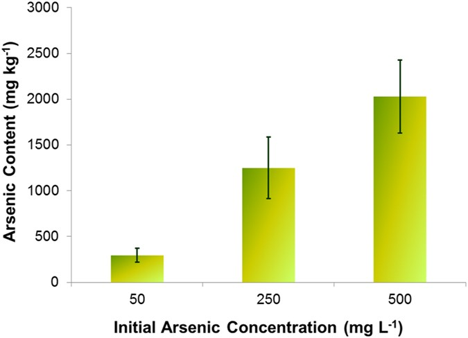 Evidence for exocellular arsenic in fronds of pteris vittata arsenic uptake by pteris vittata after 14 days data are expressed as mean standard deviation ccuart Image collections