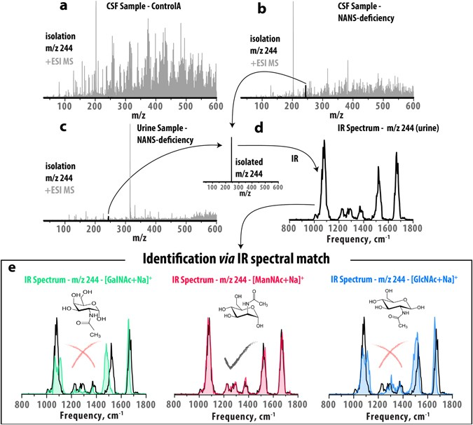 Molecular identification in metabolomics using infrared ion ... on