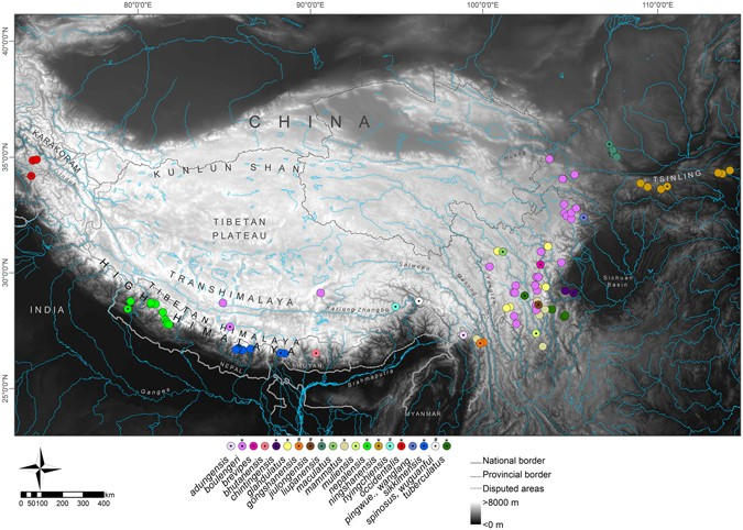 9c624898f9a4 Shown are main parts of the Himalayan Tibetan mountain system and known  records of Scutiger species. Only genetically verified records (coloured  circles) ...