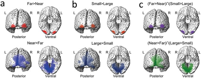 Neural Correlates underlying Size Constancy in Virtual Three