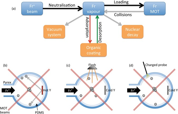 Atomic Desorption Processes For Laser Cooling Of Francium Isotopes. (a)  Interplay Between The Source Of Fr, The Vapour Phase, The MOT Population  And The ...