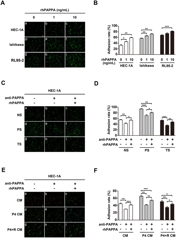 Novel function of pregnancy-associated plasma protein A