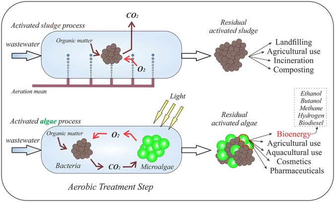 Overcoming microalgae harvesting barrier by activated algae granules microalgae based technology for aerobic wastewater treatment economic and ecologic advantages that could be obtained by implementing activated algae based publicscrutiny Image collections