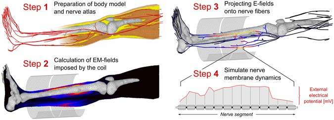 Predicting Magnetostimulation Thresholds in the Peripheral