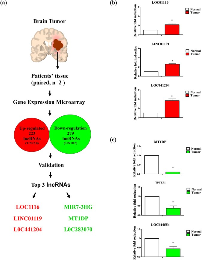 analysis and validation of lncrnas in brain tumor specimens  (a) schematic  diagram showing application of gene expression microarrays to lncrna  analysis