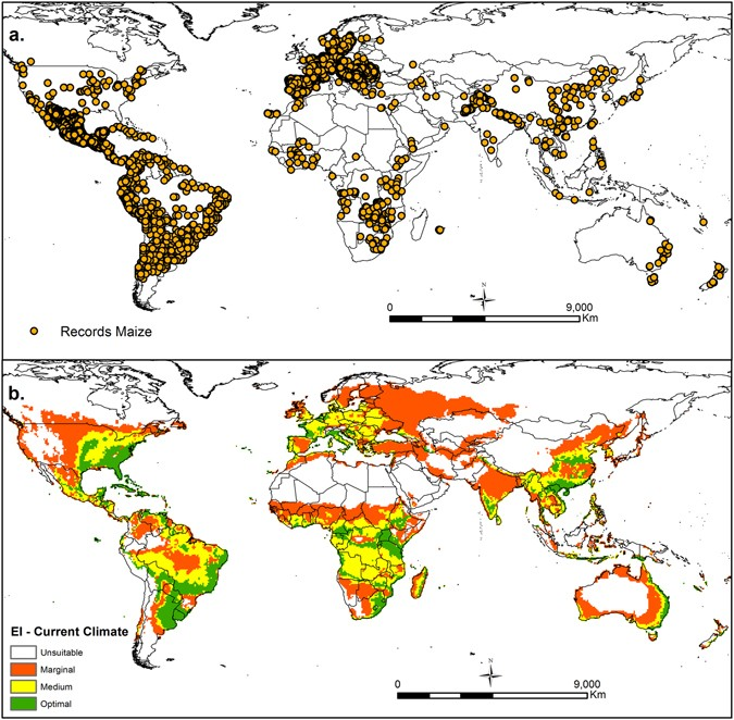 Global alterations in areas of suitability for maize production from