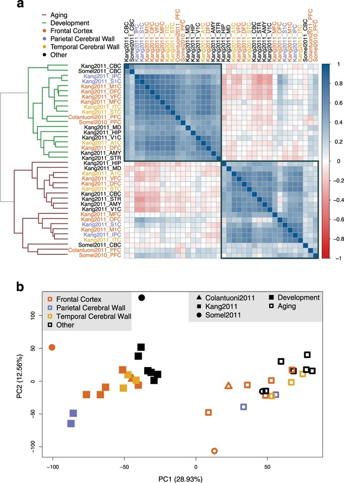Gene Expression Patterns May Underlie >> Gene Expression Reversal Toward Pre Adult Levels In The Aging Human