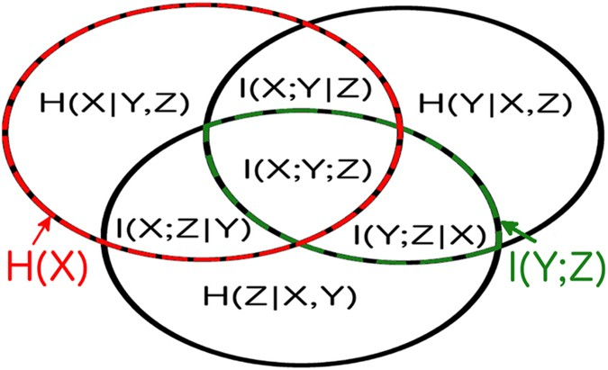 Network inference and maximum entropy estimation on information the information diagram for three variables it contains 7 regions corresponding to the possible combinations of 3 variables with their corresponding ccuart Choice Image