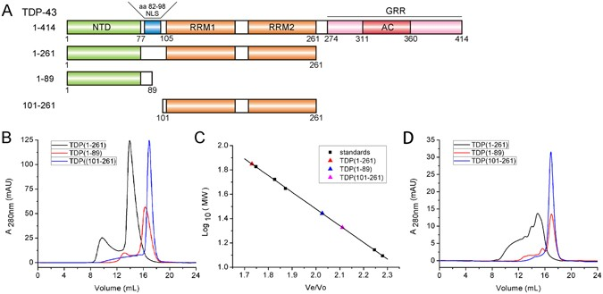 The N-terminal dimerization is required for TDP-43 splicing
