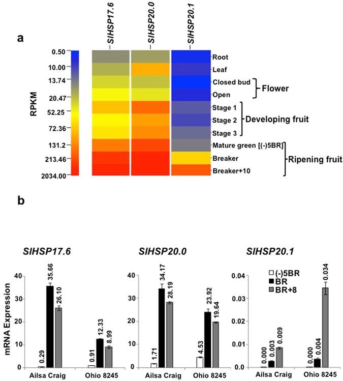 genetic improvement of solanaceous crops volume 2 razdan m k