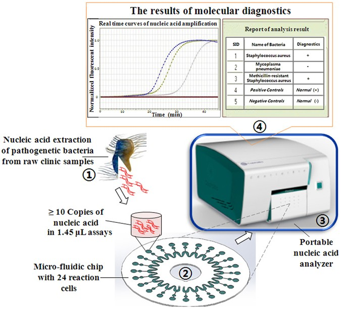 A rapid, low-cost, and microfluidic chip-based system for
