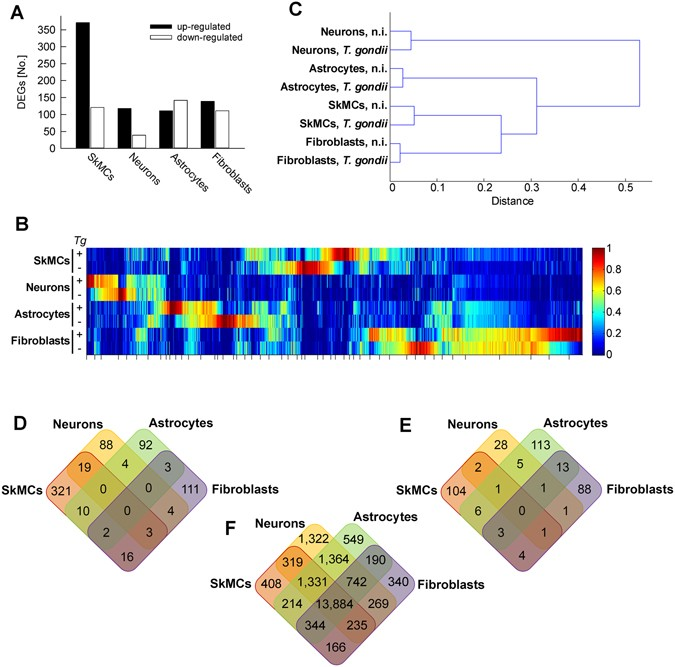 Divergent co-transcriptomes of different host cells infected