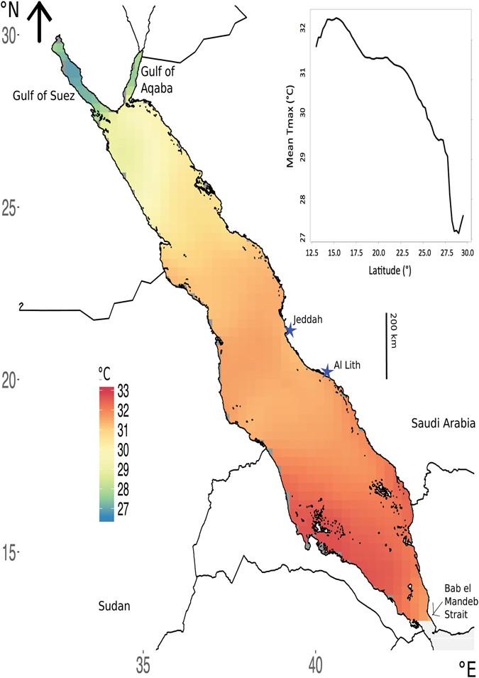 Decadal trends in Red Sea maximum surface temperature