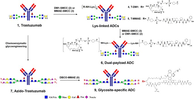 Real-Time Analysis on Drug-Antibody Ratio of Antibody-Drug