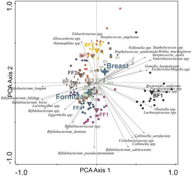 Intestinal colonisation patterns in breastfed and formula