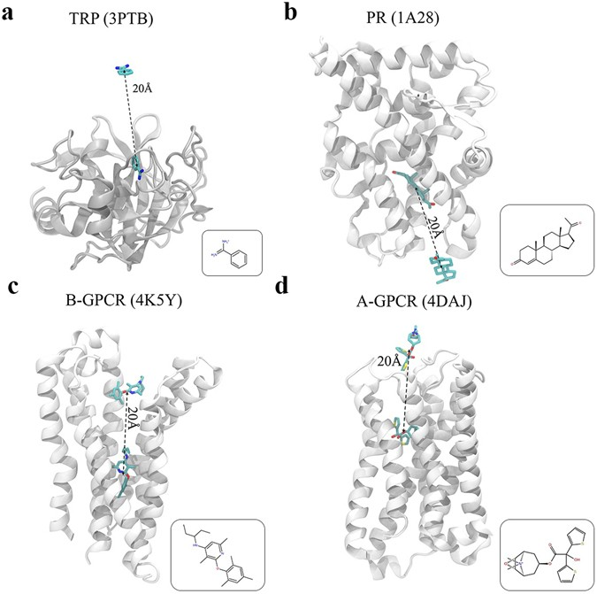 Adaptive simulations, towards interactive protein-ligand