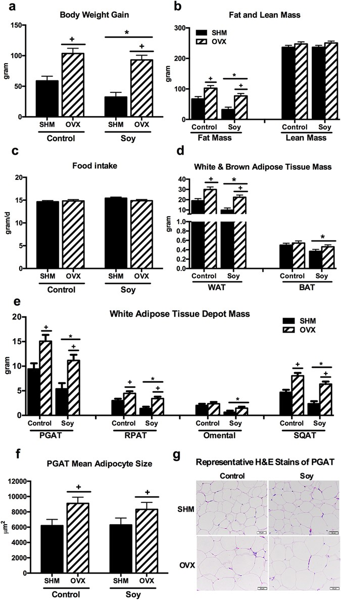 Soy Improves Cardiometabolic Health and Cecal Microbiota in