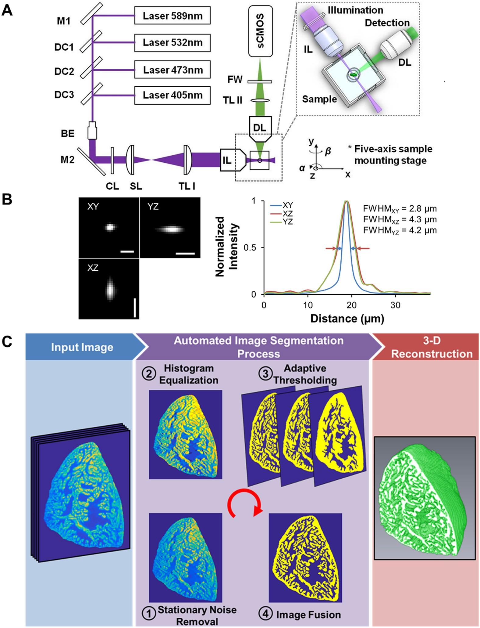 Automated Segmentation of Light-Sheet Fluorescent Imaging to
