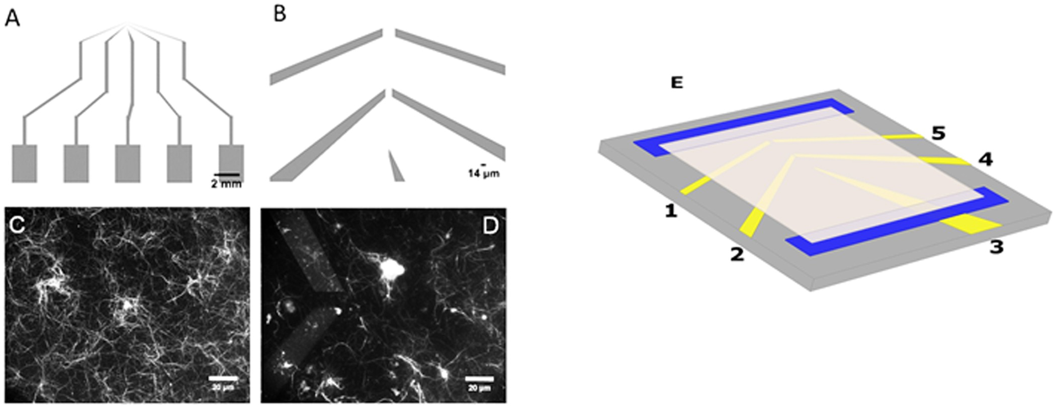 Response To Alternating Electric Fields Of Tubulin Dimers And Oscillator Transistor Between Multiple Leds Electrical Microtubule Ensembles In Electrolytic Solutions Scientific Reports