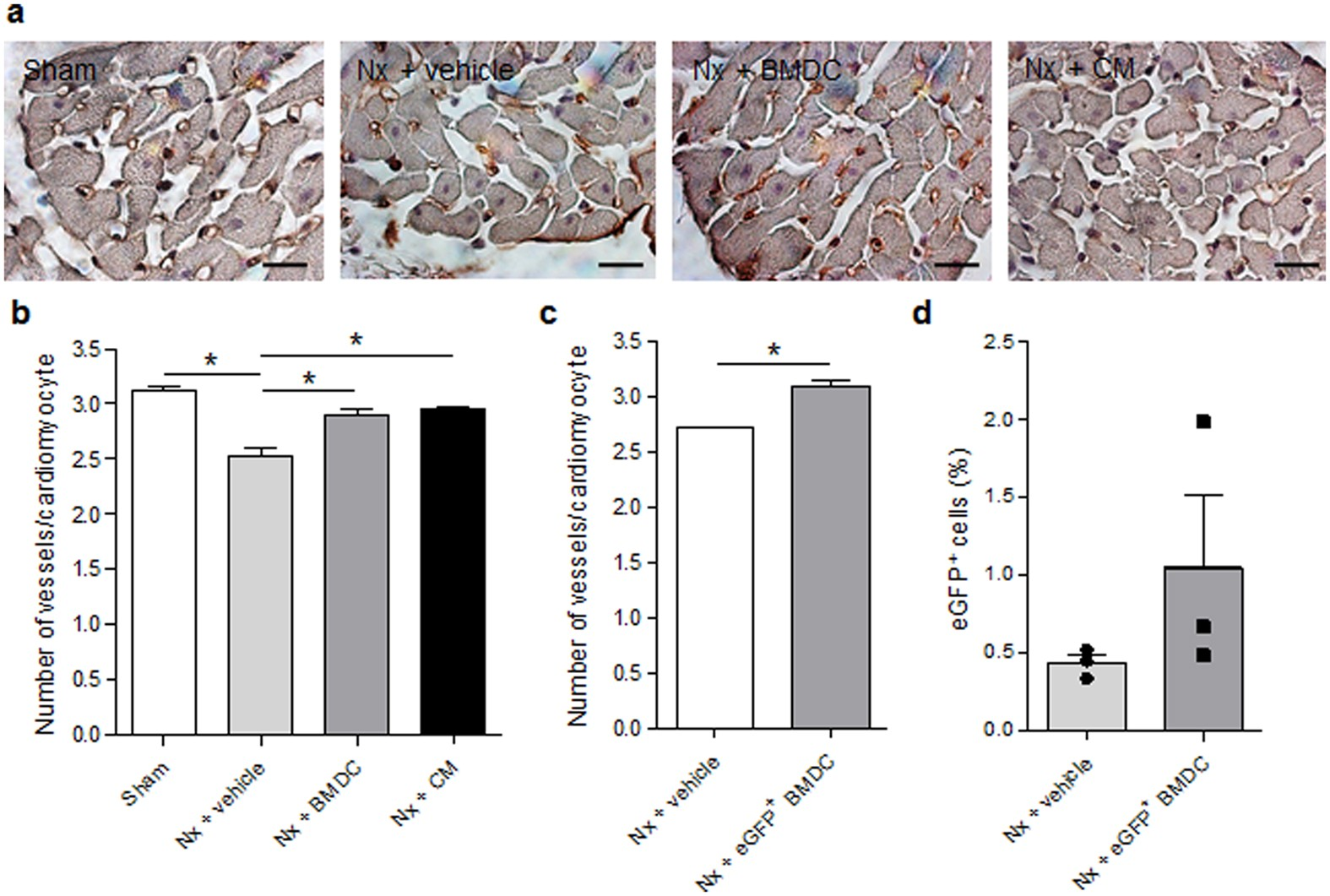 Bone marrow-derived cells and their conditioned medium