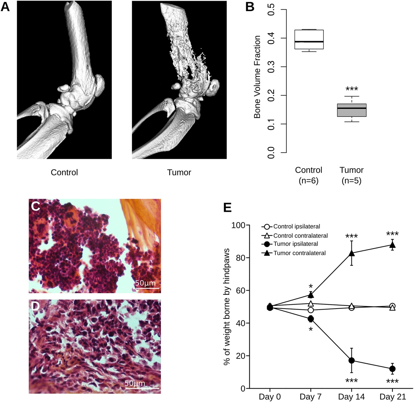 Spinal miRNA-124 regulates synaptopodin and nociception in