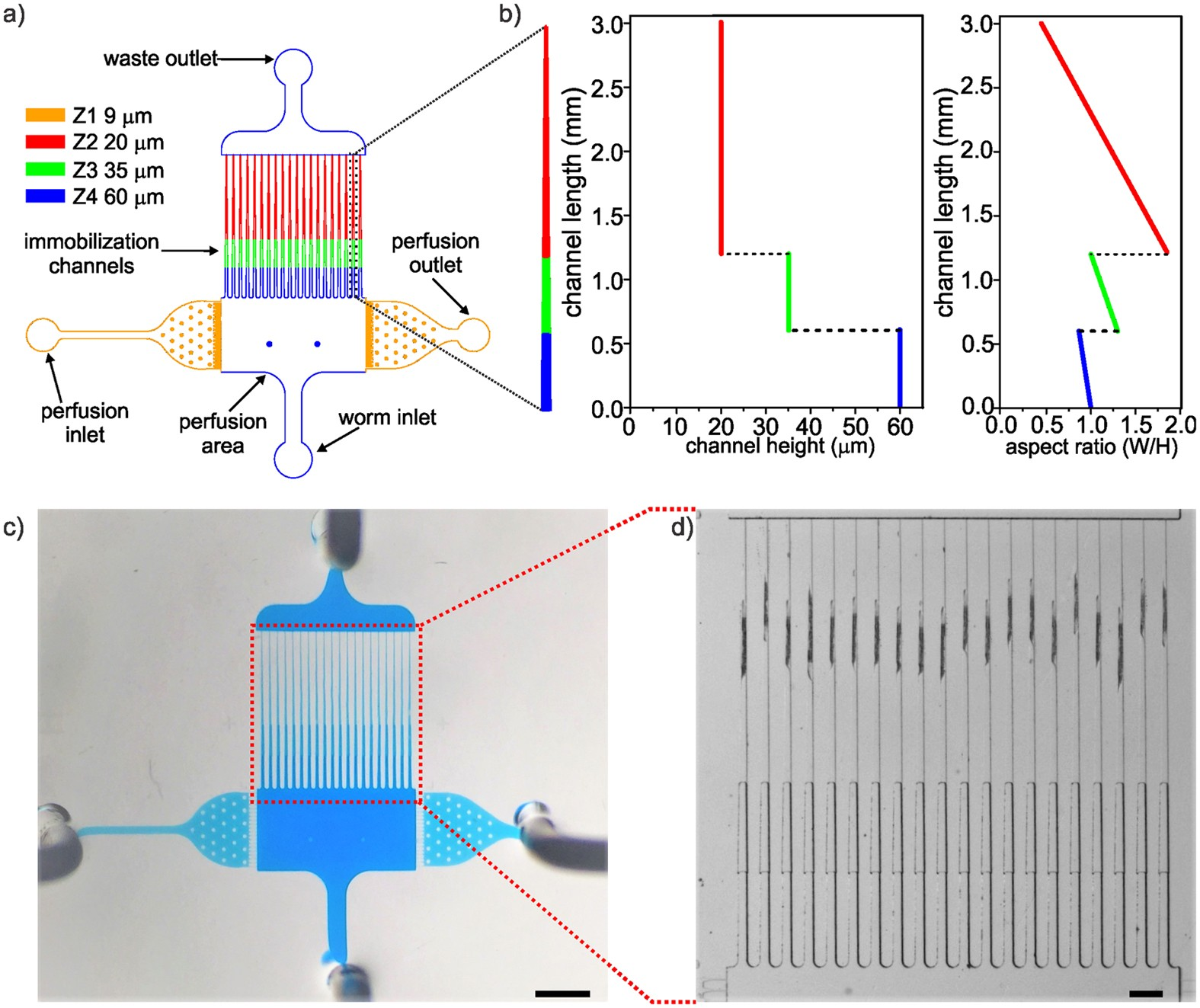 A Multi Trap Microfluidic Chip Enabling Longitudinal Studies Of Engineering Schematics Plasma Flat Screen Nerve Regeneration In Caenorhabditis Elegans Scientific Reports