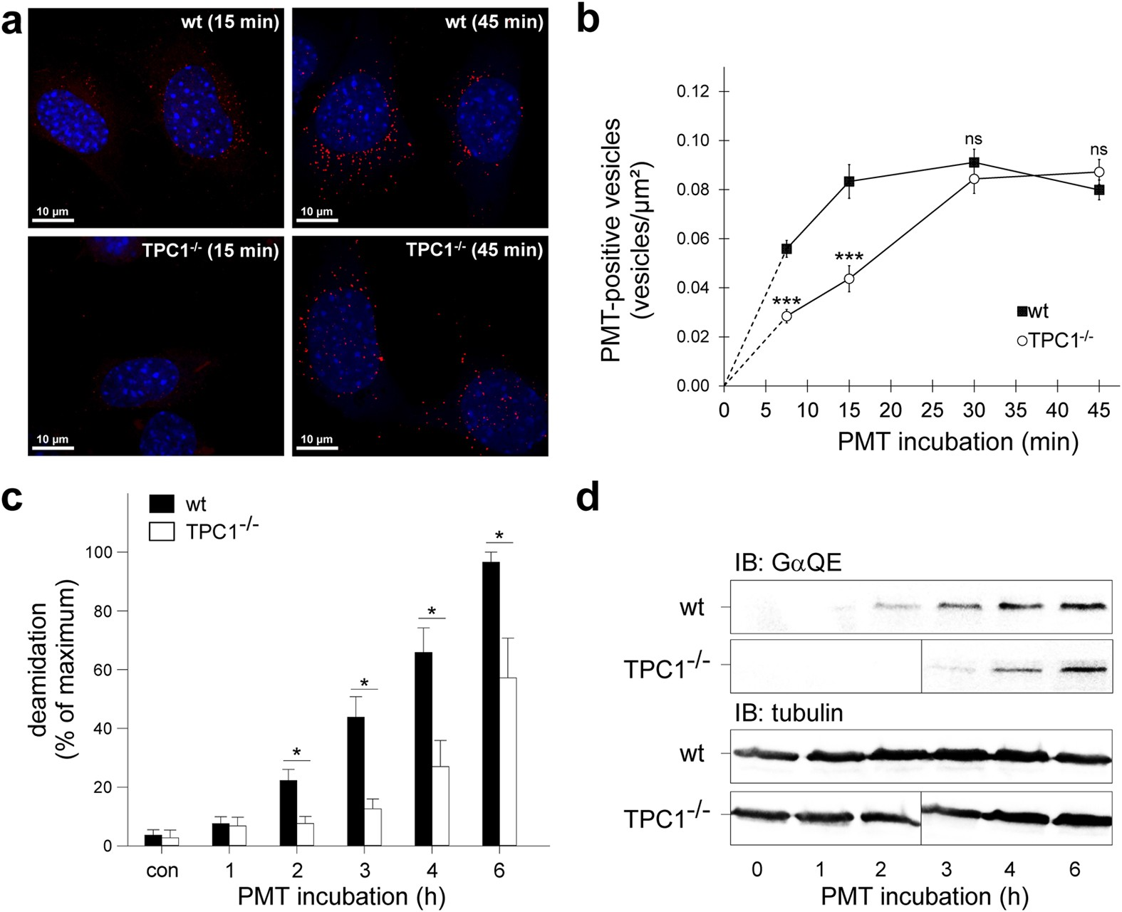 The Two Pore Channel Tpc1 Is Required For Efficient Protein Digital Binary Clock With Thermometer Hygrometer Electronicslab Processing Through Early And Recycling Endosomes Scientific Reports
