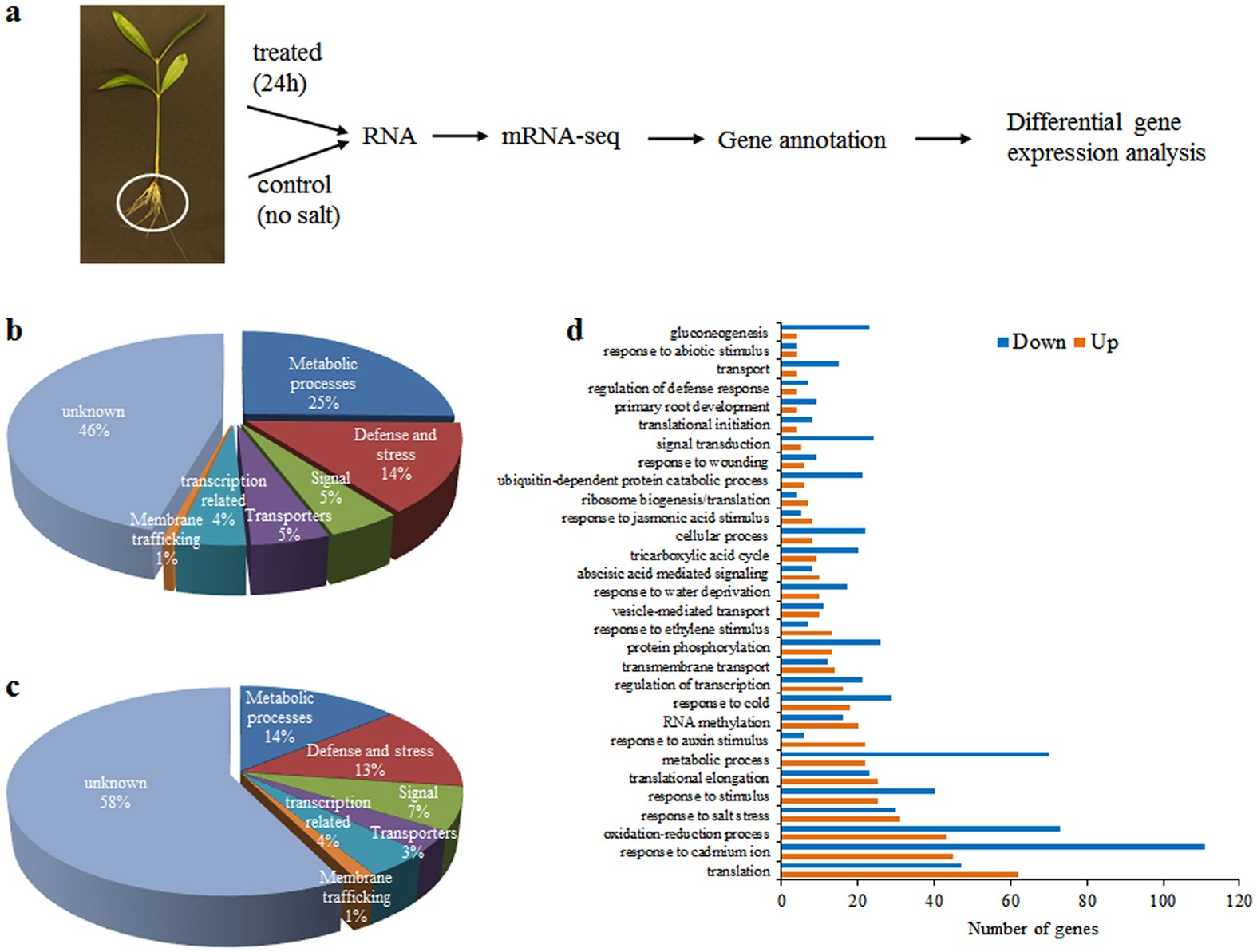 Transcriptomics Analysis Of Salt Stress Tolerance In The Roots Seed Germination Diagram Annotate Below To Mangrove Avicennia Officinalis Scientific Reports