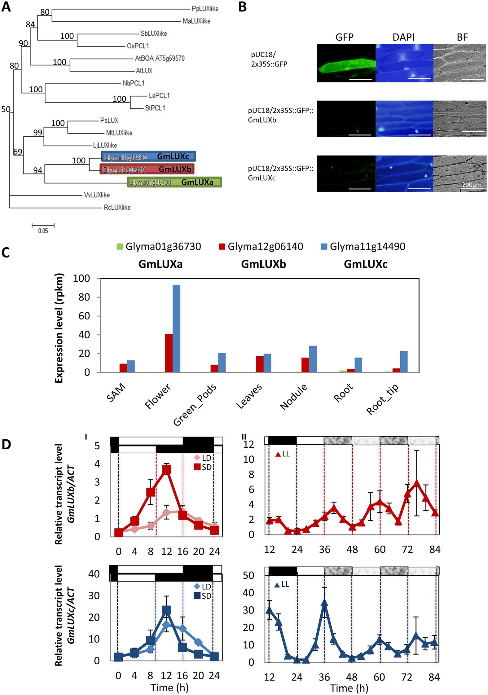 A novel role of the soybean clock gene LUX ARRHYTHMO in male reproductive  development | Scientific Reports