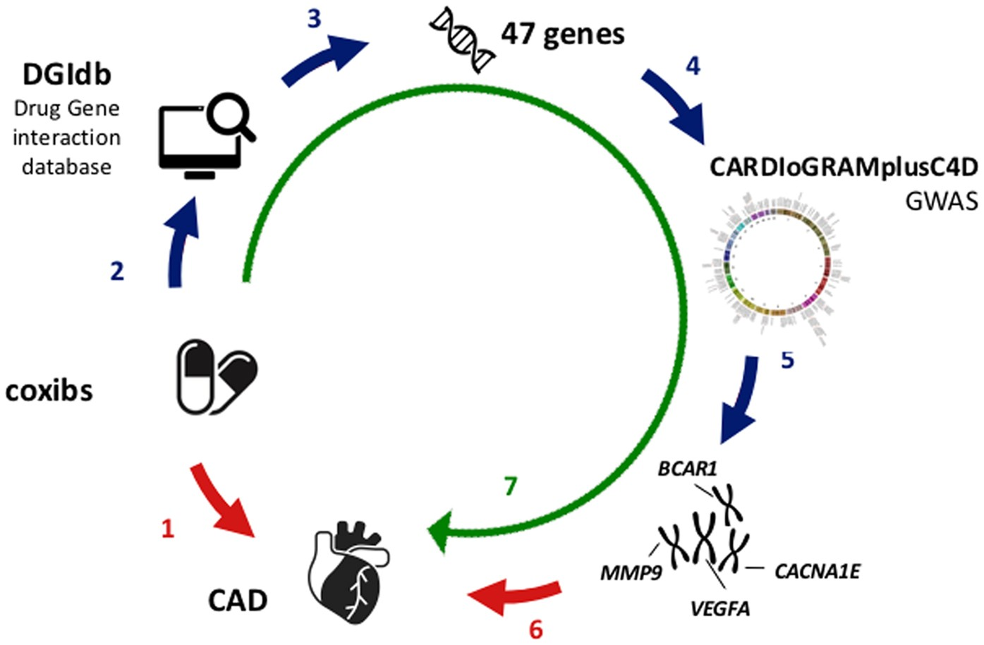 A genomic exploration identifies mechanisms that may explain a genomic exploration identifies mechanisms that may explain adverse cardiovascular effects of cox 2 inhibitors scientific reports pooptronica Choice Image