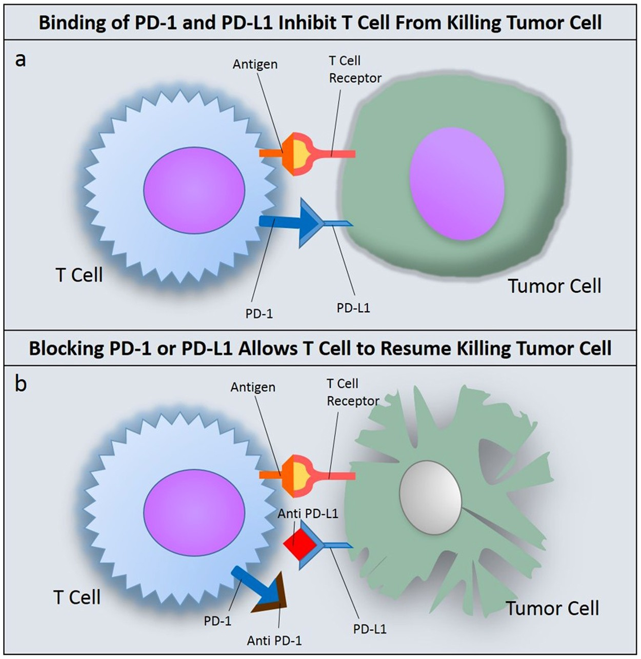 identification and validation of a pd-l1 binding peptide for determination  of pdl1 expression in tumors | scientific reports