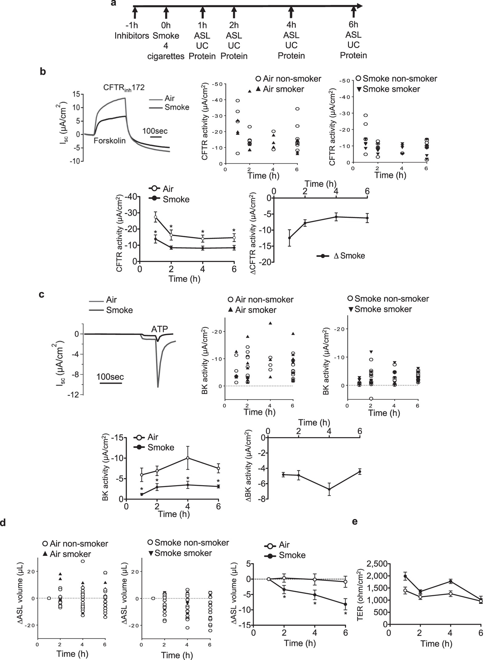 Role Of Smad3 And P38 Signalling In Cigarette Smoke Induced Cftr H 261 Block Diagram Bk Dysfunction Primary Human Bronchial Airway Epithelial Cells Scientific Reports