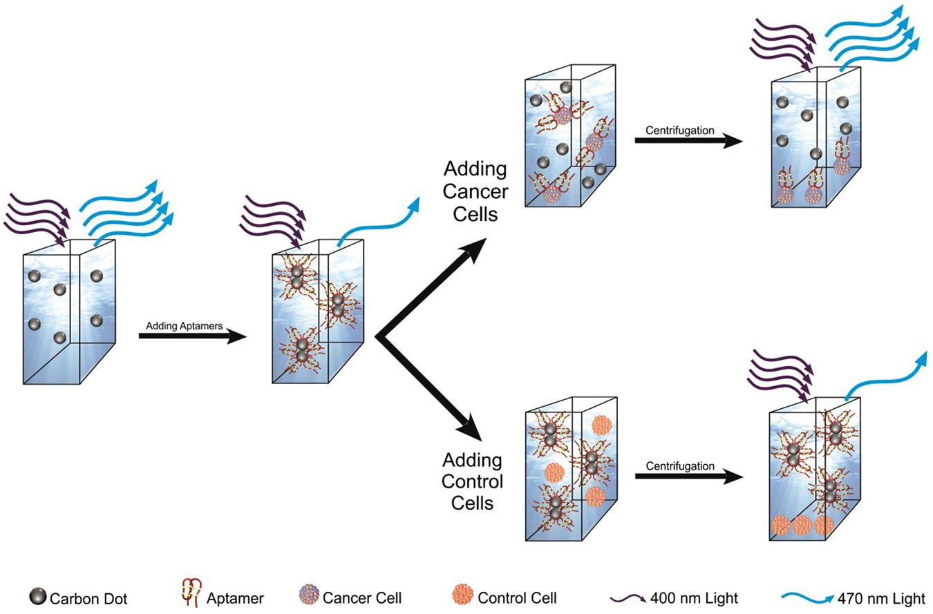 Carbon Dots As1411 Aptamer Nanoconjugate For Ultrasensitive