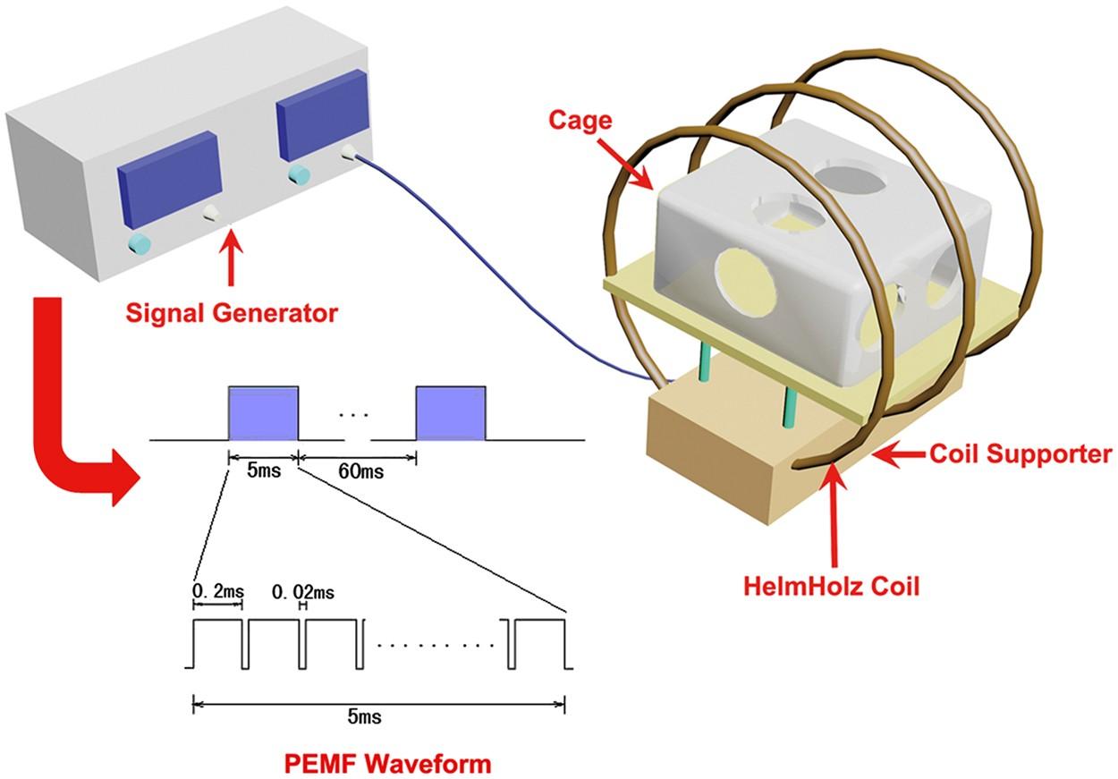 Effects of low-intensity pulsed electromagnetic fields on bone