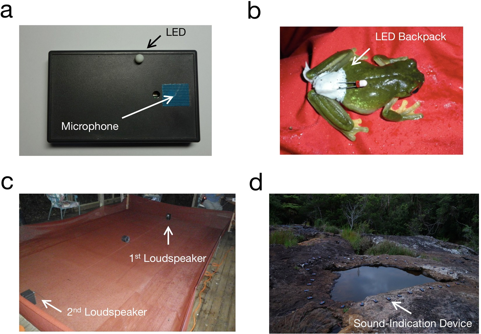 Visualizing Phonotactic Behavior Of Female Frogs In Darkness