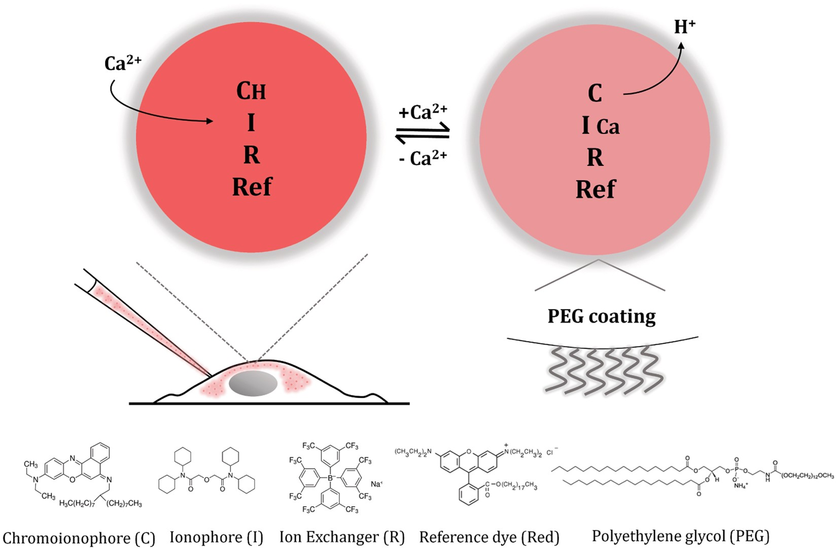 A method for estimating intracellular ion concentration