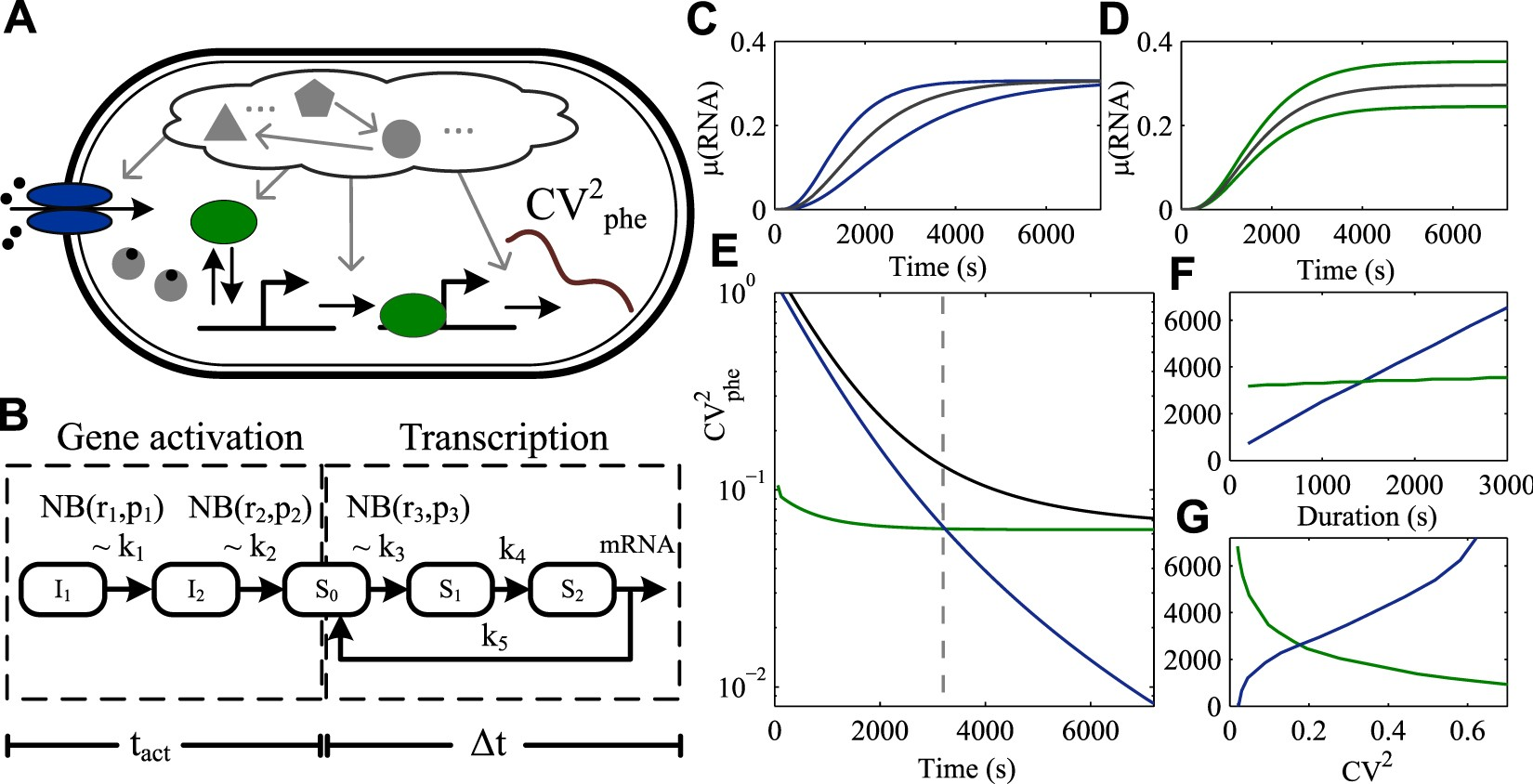 Rate Limiting Steps In Transcription Dictate Sensitivity To The Above Circuit When Toggle Switch Is Open As Shown 12 Variability Cellular Components Scientific Reports