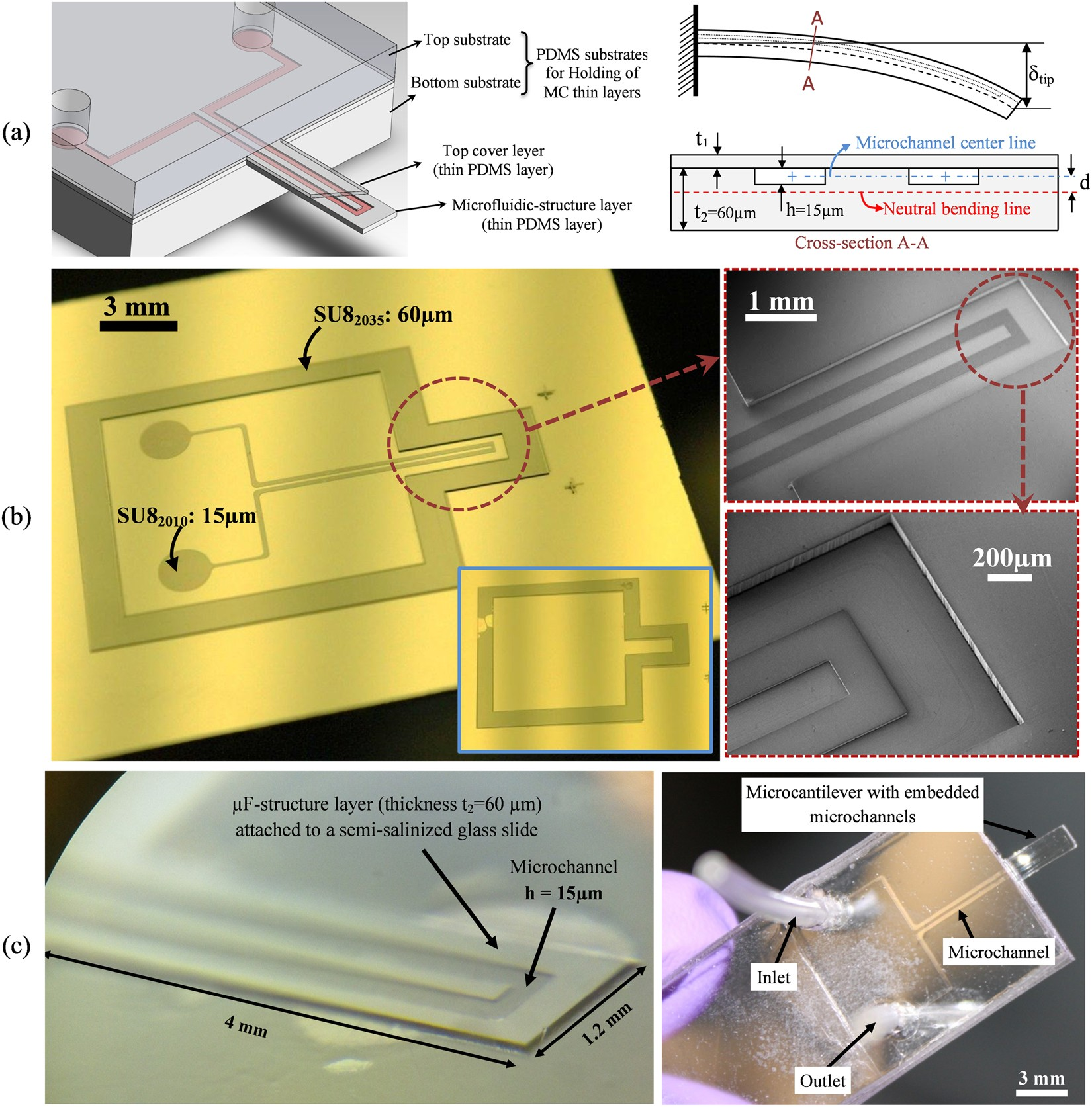 Nano Integrated Suspended Polymeric Microfluidics Spmf Platform Cantilever Beam Moment Diagram Coloring Pages For Ultra Sensitive Bio Molecular Recognition Of Bovine Growth Hormones Scientific