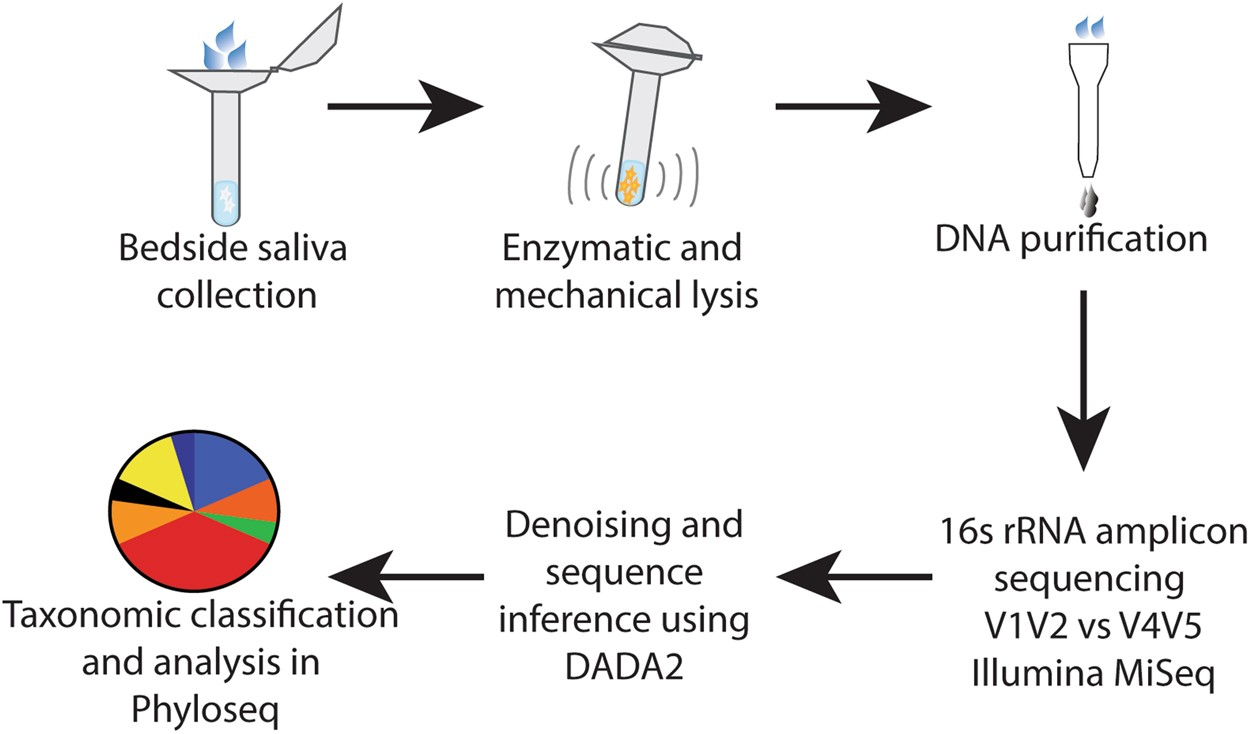 The salivary microbiome is consistent between subjects and resistant