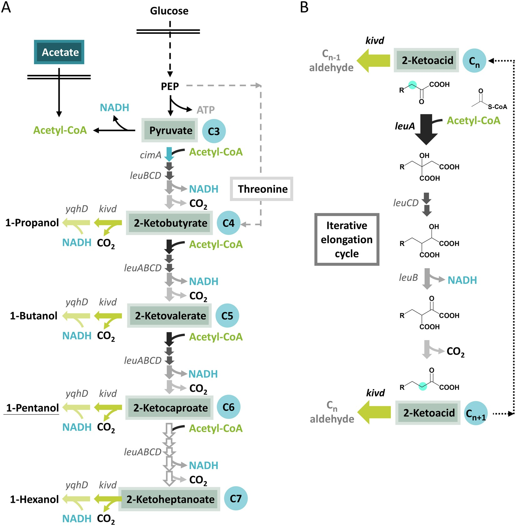 Saturated mutagenesis of ketoisovalerate decarboxylase V461 enabled