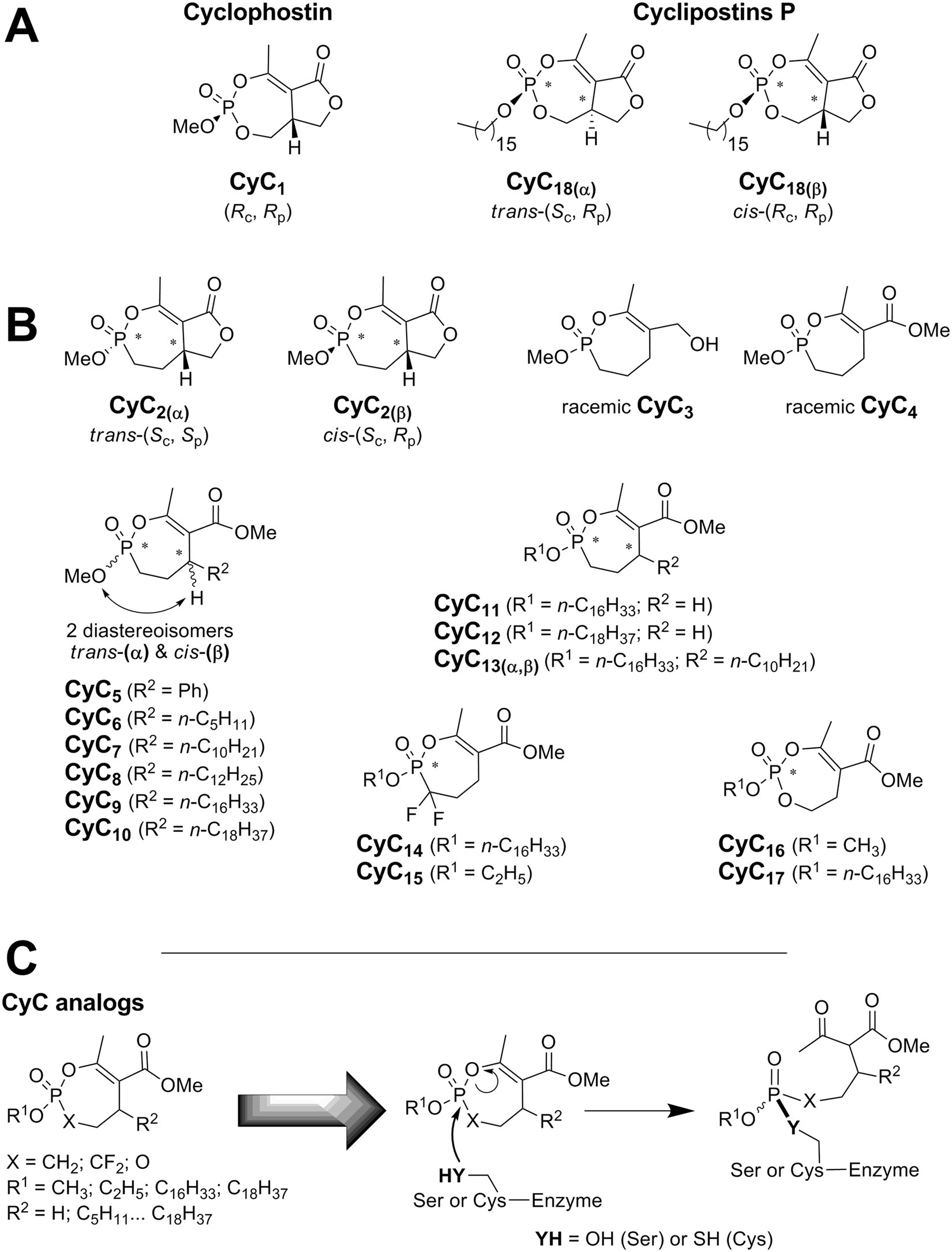 cyclipostins and cyclophostin analogs as promising pounds in the Anti-Static Blower cyclipostins and cyclophostin analogs as promising pounds in the fight against tuberculosis scientific reports