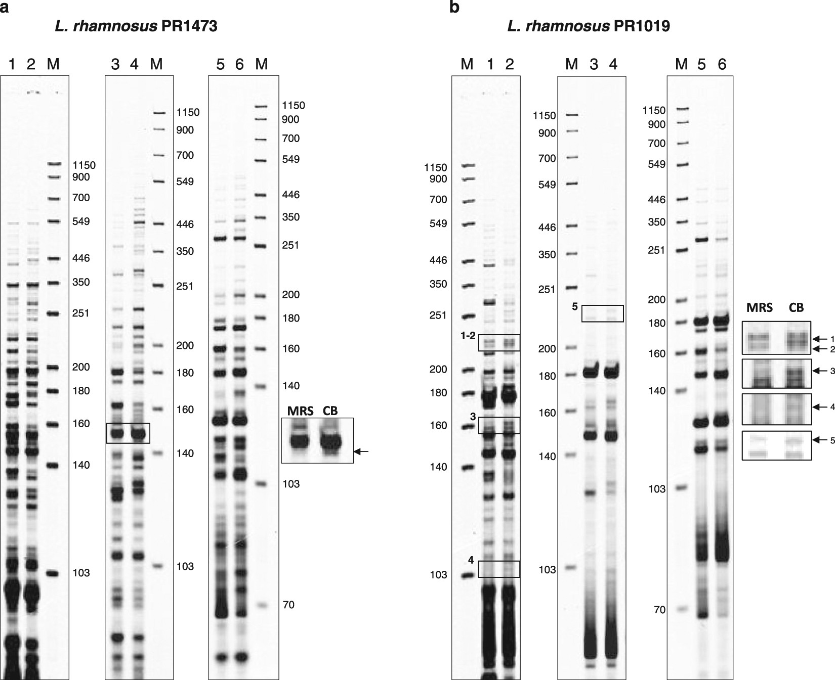 Toward the identification of a type I toxin antitoxin system in the