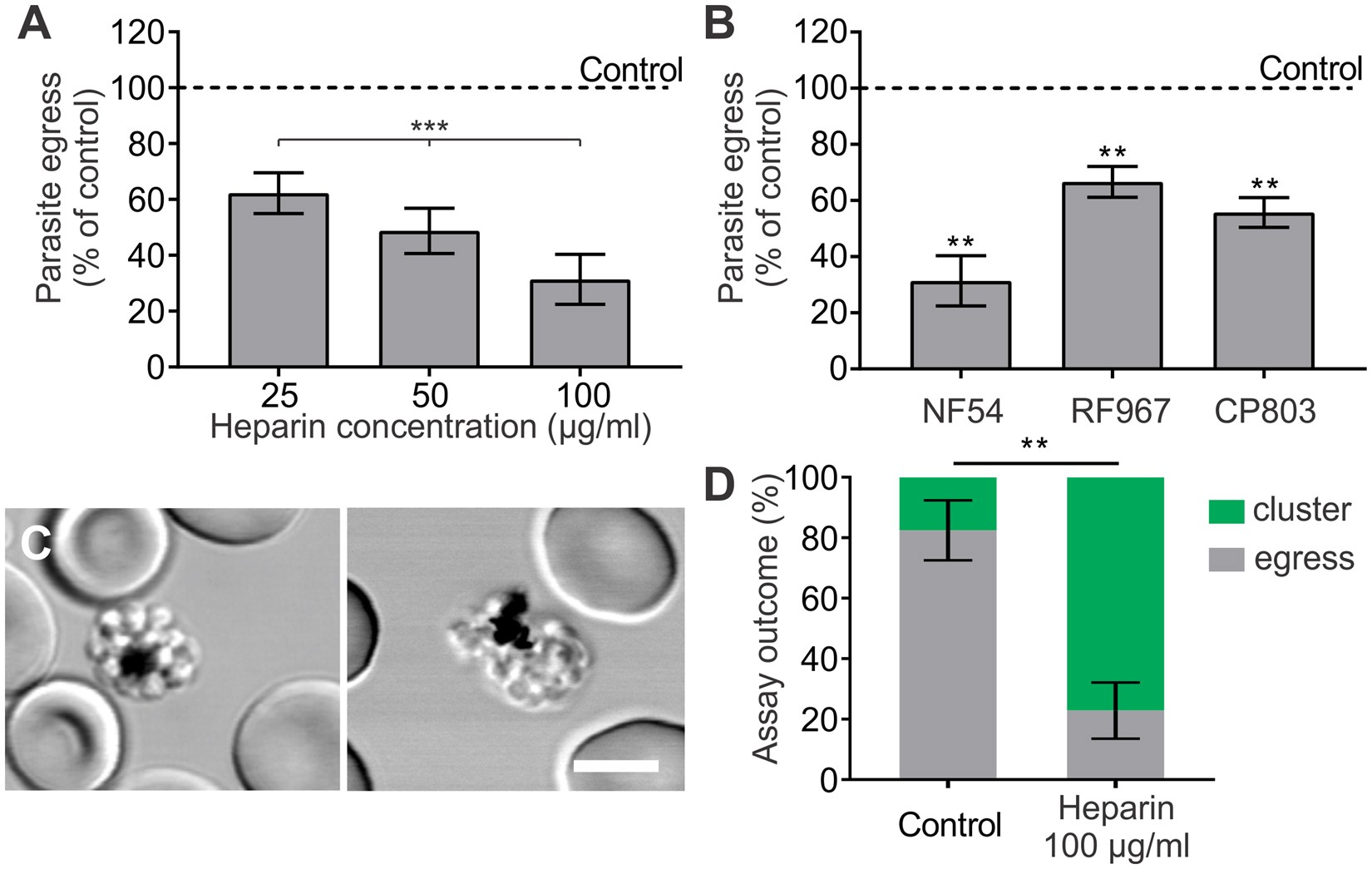 Exploitation Of A Newly Identified Entry Pathway Into The Malaria White Blood Cell Labeled Diagram When Cells Invade Parasite Infected Erythrocyte To Inhibit Egress Scientific Reports
