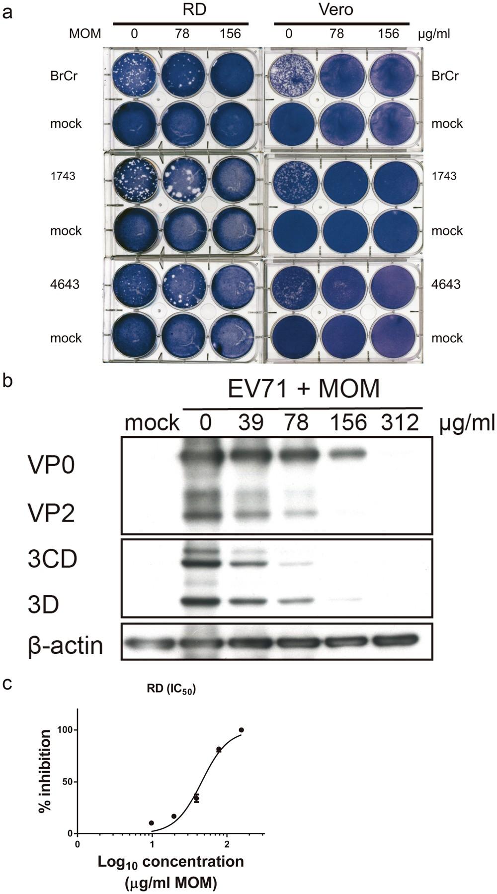 Anti-enterovirus 71 activities of Melissa officinalis extract and