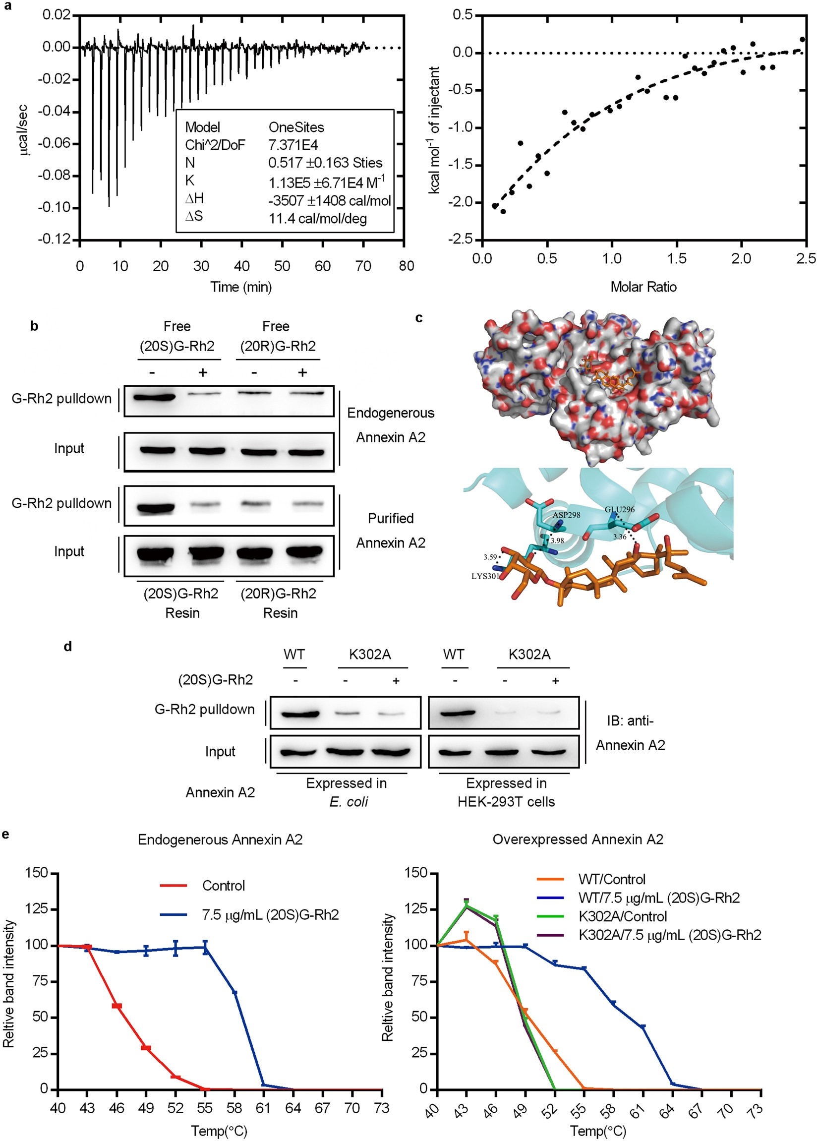 The identification of molecular target of (20S) ginsenoside Rh2 for its  anti-cancer activity | Scientific Reports
